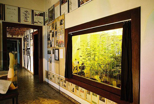 Blick in die Ausstellung, Blick auf die Hanfpflanzen Vitrine im Hanf Museum Berlin